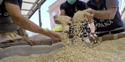 15 معمل للكبتاغون و200هيكتار لزراعة المخدرات في سوريا