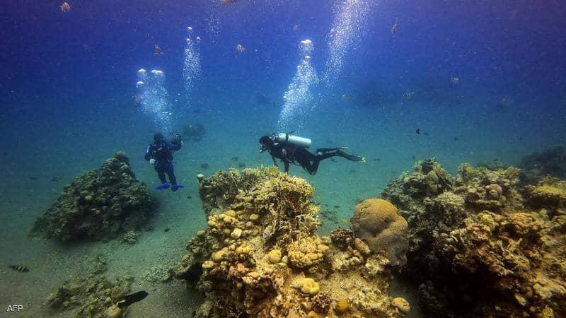 حماية الشواطئ والبيئة المائية في البحر الاحمر